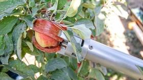 Japón desarrolla un robot para recolectar frutas para combatir la falta de mano de obra