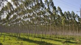 Mega reforestación mundial