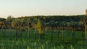 Montes del Plata: producir y conservar, en Uruguay