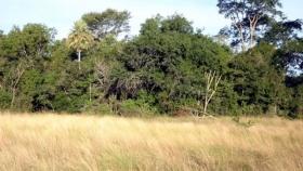 En 2030 área forestal en el Chaco seguirá en 45%