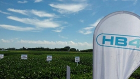 Paraguay aprobó la venta de la soja HB4, tolerante a sequía
