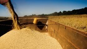 Divisas: el agro ya liquidó US$20.100 millones