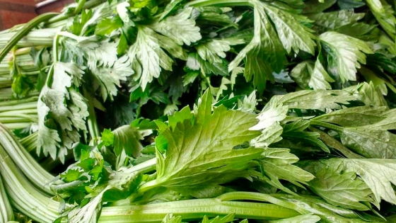 Apio: todas las propiedades y beneficios de una de las verduras más saludables