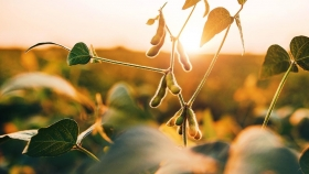La soja arranca la semana con ganancias