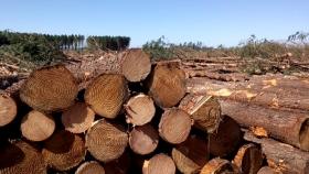 Misiones: se acordó un incremento del 35% en el precio de los rollos de madera