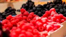 Innovación: Usan tecnología CRISPR para desarrollar nuevas variedades de berries