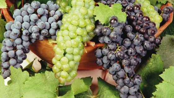 Buenas noticias llegan desde Brasil para las uvas argentinas