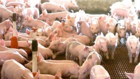 Asociativismo: la clave para el crecimiento de la producción porcina