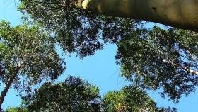 Ola verde: la agroindustria apuesta a los bosques para salir de la crisis económica