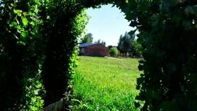 Jardín: cómo transformar los brotes de álamo en una decoración
