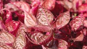 Paisajismo: cómo usar las plantas moradas en tu jardín