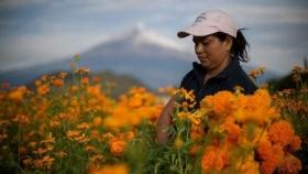 """Insisten con un proyecto de ley que busca garantizar """"protección integral"""" para las Mujeres Rurales"""