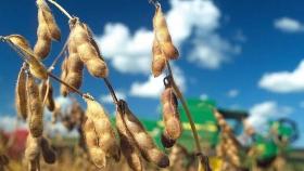 Cae la producción de soja y maíz en los Estados Unidos