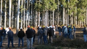 Facilitan trámites para acceder a las promociones de la Ley Forestal