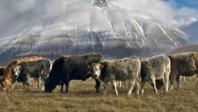 Uso de la tierra para resolver el cambio climático: un enfoque en la ganadería