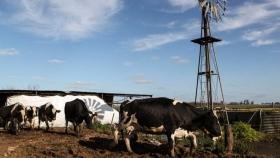 Sociedad Rural Argentina plantea opciones de inversión con impuestos agropecuarios