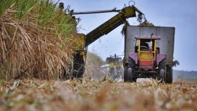 Tucumán: peligran los productores chicos de caña de azúcar