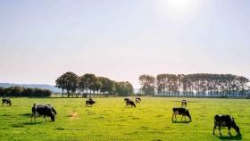 Huella hídrica del sector ganadero argentino