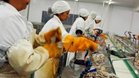 Se deberá procesar el 20 por ciento del calamar que se captura