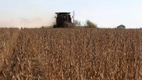 De sojeros con precios altos y ganaderos muy contrariados