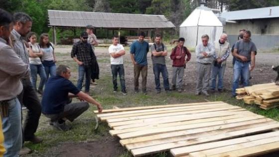 Valor agregado de la madera: Pino ponderosa para uso estructural.
