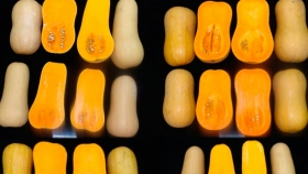 Buscan híbridos de zapallos tipo anco con calidad de exportación