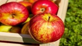Manzanas: recomendaciones para disfrutarlas todo el año