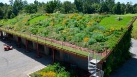 Techos verdes y muros vivientes, la naturaleza en casa