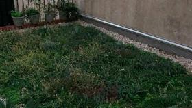 Aprender sobre techos verdes urbanos, desde casa