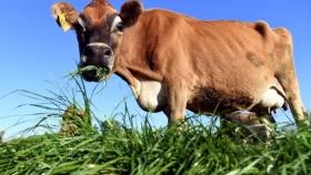 Lo que Nueva Zelanda está haciendo realmente sobre el clima y los problemas para separar la agricultura de las emisiones netas cero