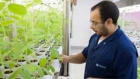 El 23% de la soja del mundo se trata con tecnología de una empresa argentina