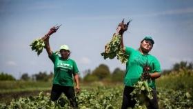 """El gobierno argentino quiere implementar este año el """"Banco de Tierras para la Agricultura Familiar"""