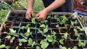 Emmaüs France: una convocatoria de proyectos en torno a la agricultura y la alimentación sostenibles