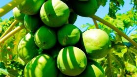 El  Agro acompaña en territorio el desarrollo de la producción en el contexto de Covid-19