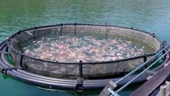 Nuevo proyecto en contra de la cría de salmónidos