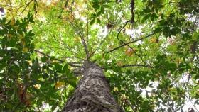 45% de las especies de árboles endémicos de Venezuela están en peligro de extinción