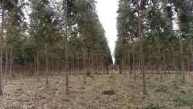 Las forestaciones en la cuenca del río Uruguay y las nuevas tecnologías