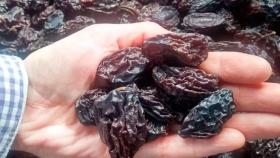 Elaboran snacks saludables con excedentes de ciruela