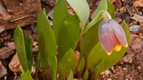 8 formas de mulitplicar o reproducir las plantas de tu huerto y jardín