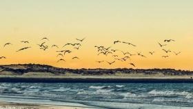 Puerto Madryn, una ciudad galesa en el paraíso