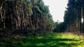 Forestación en pastizales de la llanura pampeana: el rol del manejo forestal y la selección de especie en el proceso de salinización secundaria de suelo