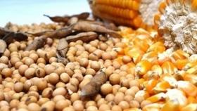 El impacto del informe mensual del USDA en el mercado de Rosario