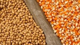 La soja vuelve a subir con fuerza y un inusual anuncio del USDA impulsa al maíz