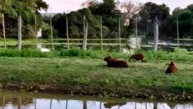 El Chaco paraguayo y la tecnología de captación de agua