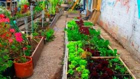 Cómo sembrar en tu propia huerta orgánica