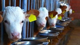 Agregar costos climáticos a la etiqueta de precio: los investigadores calculan el costo real de la carne, la leche y los alimentos de origen vegetal