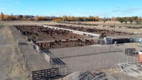 Fertirriego, rinde y seguridad productiva en la Patagonia