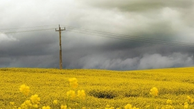 La agricultura regenerativa lucha triste