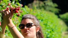 El vivero especializado en la multiplicación de plantas de frutos del bosque