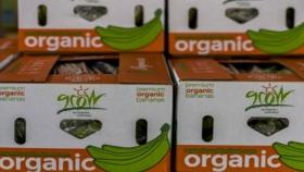Organics Unlimited: la empresa que ofrece banano orgánico y crece durante la pandemia